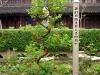 Longhua Tempel Zwischen den Hallen
