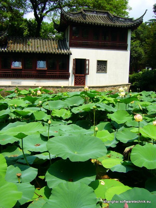 Lotus-Meer
