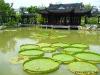Teich mit Lotus-Blättern