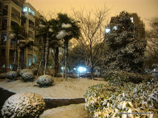 Verschneite Palmen vor der Wohnung
